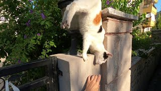 Cute cat doing a handstand on the wall