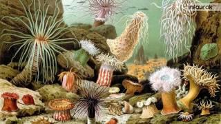 Морские кишечнополостные