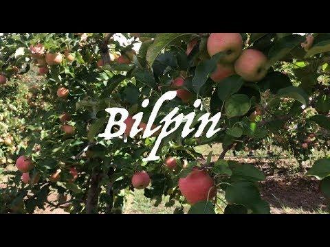 Apple Picking | Nut Picking | Sydney's Best Attractions – Bilpin |