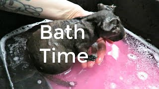 Tubby Times For Willy: Senior Skinny Pig Bath