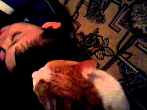Как ведут себя настоящие коты