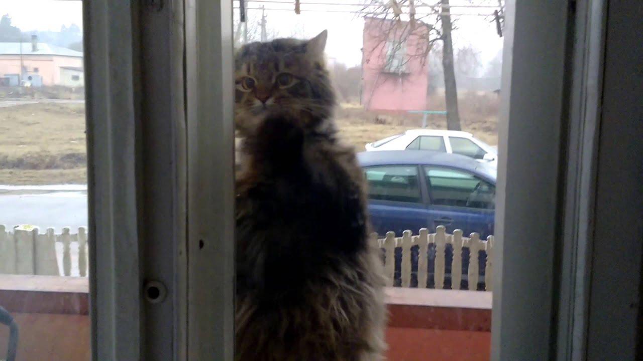 Кот просится домой видео