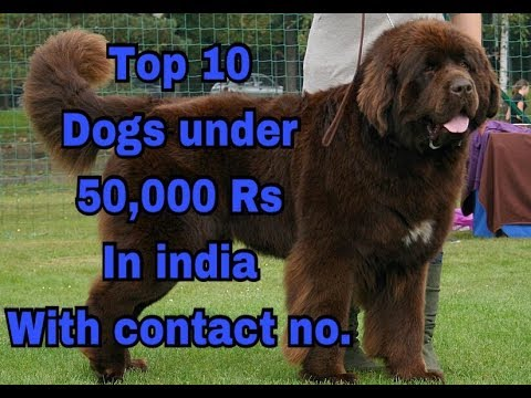 Top 10 Dogs Under 50 000 Rs In India