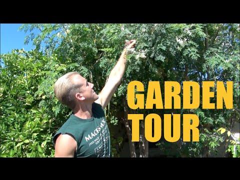 Arizona Garden Tour - Over 200 Fruit Trees on 1/3 Acre - Spring 2016