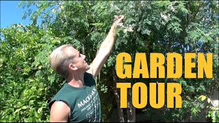 Arizona Garden Tour - Over 200 Fruit Trees on 1/3 Acre - Spring 2016