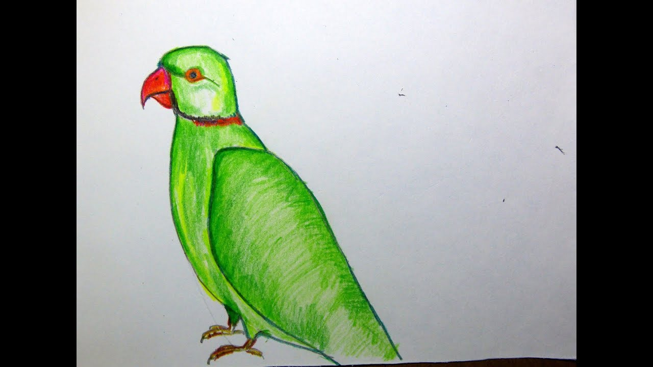 How To Draw A Parrot With Colored Pencil For Kids School Project