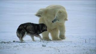 Not Just A Man's Best Friend! - Nature's Weirdest Events - Episode 1 - Bbc Two