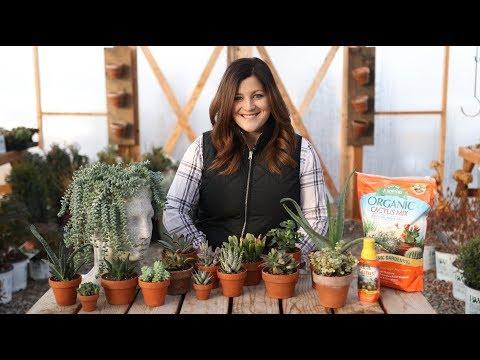Indoor Succulents for Beginners