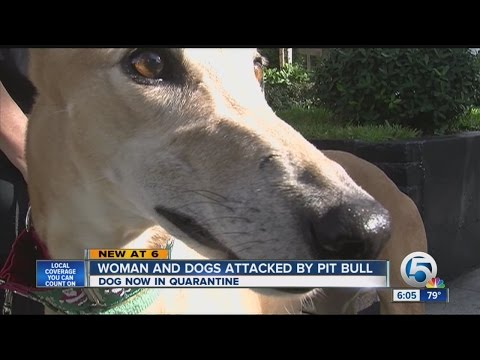 Officers fatally shoot stray pit bull attacking woman, other dog in Glendale from YouTube · Duration:  2 minutes 13 seconds
