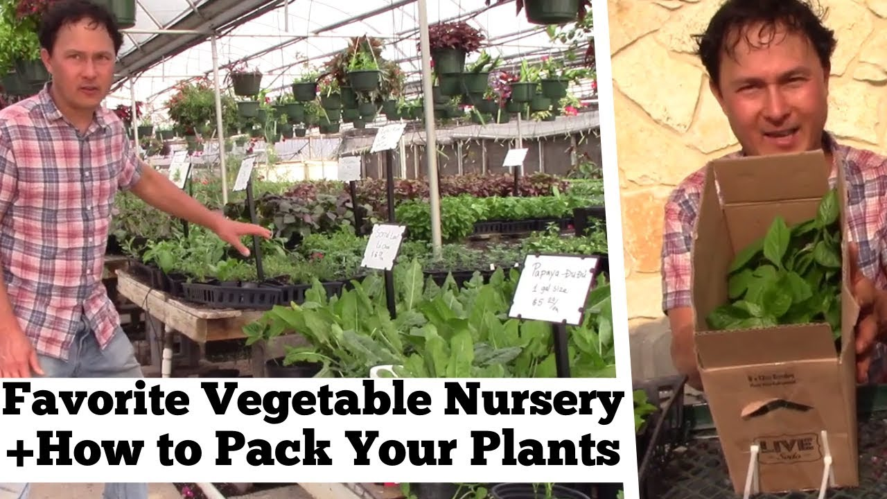 My Favorite Vegetable Nursery In Dfw Dallas How To Pack Plants