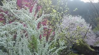 ウェザーリポート動画0325@宮崎県西米良村by.とみちゃん thumbnail