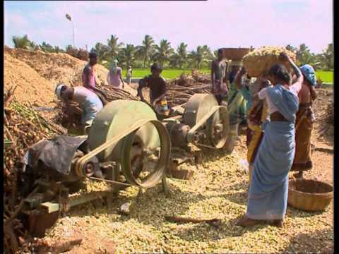 Energy from Agro waste