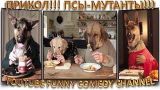 Лучшие приколы, псы-мутанты!:-) Собаки, которые культурно едят руками и столовыми приборами!