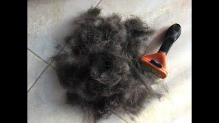 Лабрадор линяет - чем вычесывать шерсть