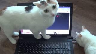 кошки развлекаются / видео для кошек