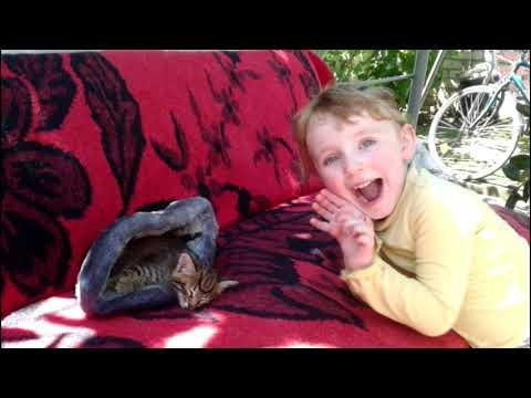 #56 Беркут малыш Играющий котенок - Домашнее видео на канале Лена Ловкая