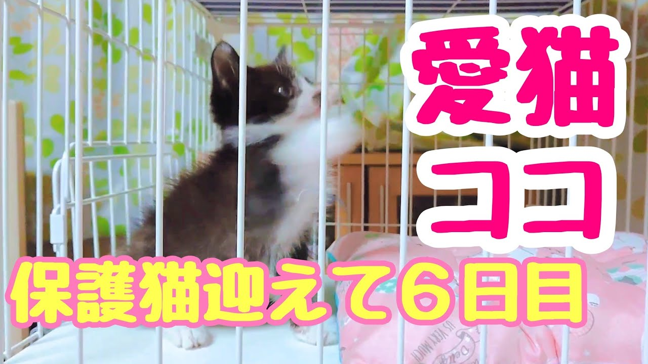 Protective Cat『保護猫』先住犬と保護猫