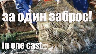 Рыбалка Кастинговой Сетью Сколько можно поймать за один заброс Casting net fishing Лучший бросок