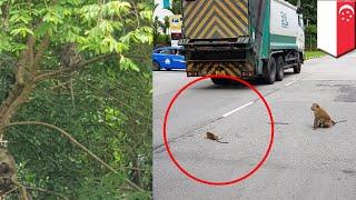 Bayi monyet tergeletak di jalan ditolong oleh pejalan kaki - TomoNews