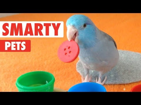 Smarty Pets | Funny Pet Video Compilation 2018