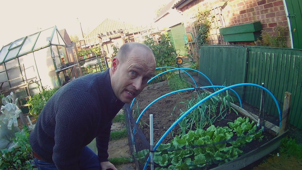 A quick look around allotment - YouTube