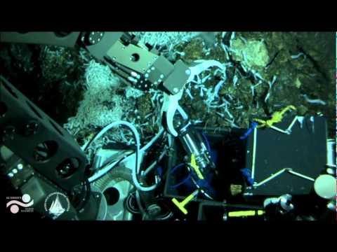 FK008 - Nereus Dive 061 PART II - Oases 2013 - 27 June