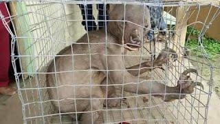 New Creature Found near Kerala and Karnataka border...