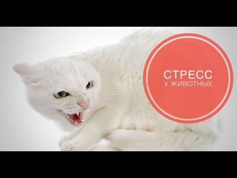 Вопрос: Почему проявляется агрессия у домашних животных (кошек)?