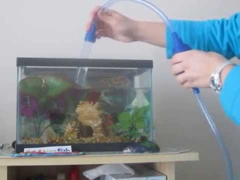 2.5 gallon betta tank water change -