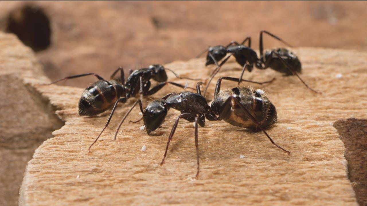 ants on carpet  Floor Matttroy