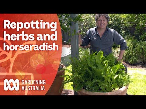 Refresh and repot an overgrown herb garden   Growing fruit and veg   Gardening Australia