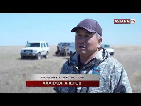 Репортер представляет. Браконьеры(08.09.2019)