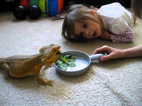Bearded Dragon Nacho And Our Kids Youtube