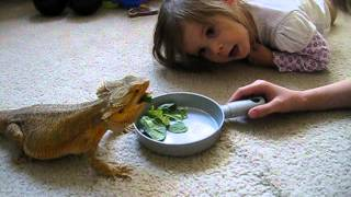 Bearded Dragon Nacho And Our Kids!