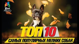 Топ 10 cамых популярных мелких собак\Top 10 most popular small dogs