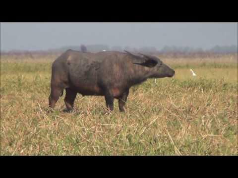 NT PIG HUNTING 2016