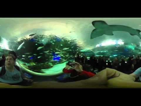360 video of ripleyaquarium Toronto