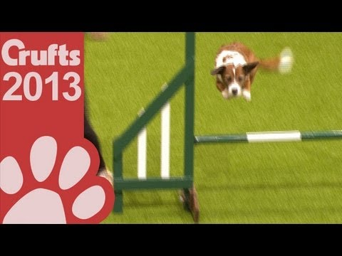 Rescue Dog Agility - Day One - Crufts 2013
