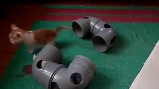 угарные котята игрушки для котят своими руками