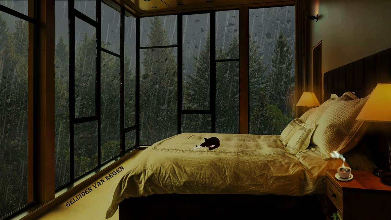 Listen to the Falling Rain and Sleep In Cozy Bedroom in Amazon Rainforest Was Perfect