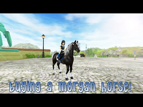 Buying a Morgan horse ♡ Star Stable