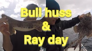 A day at anchor for Bull Huss and Rays