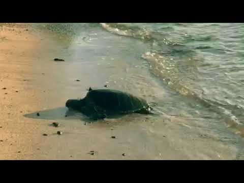Turtle getting warm