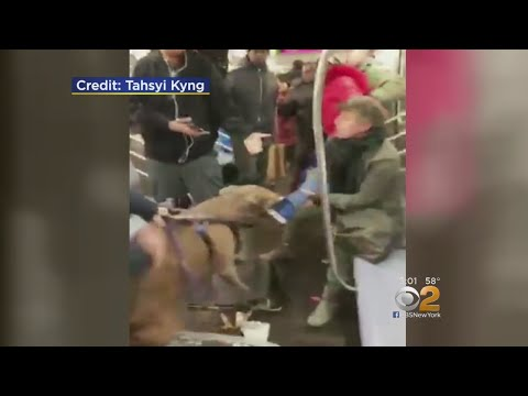 CBS2 Demands Answers: Why Was Pit Bull On Train?