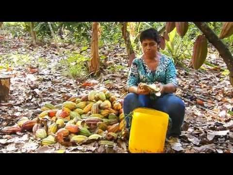 El cacao de la Hacienda Nápoles va a la Escuela de campo (Capítulo completo)