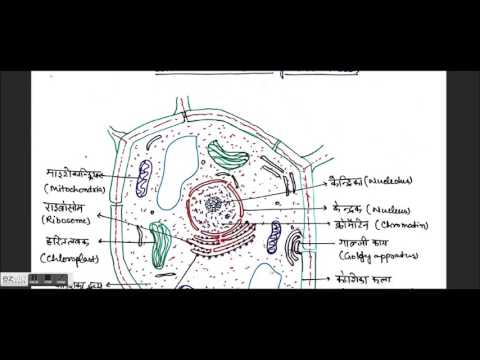 Plant & Animal Cell, Cell organales, Structure & function Biology 2.1