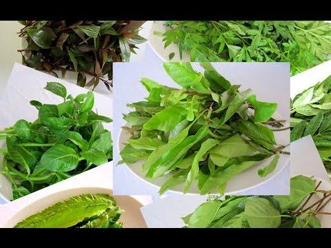 Как выглядит имбирь: рассмотрим растение на фото и видео