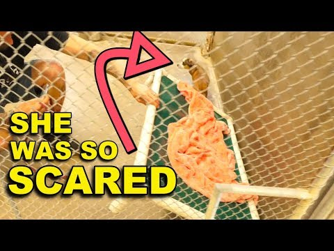 Rescue Dog BLOSSOM Terrified Until Hiding Spot Transformed | Featured on The Dodo