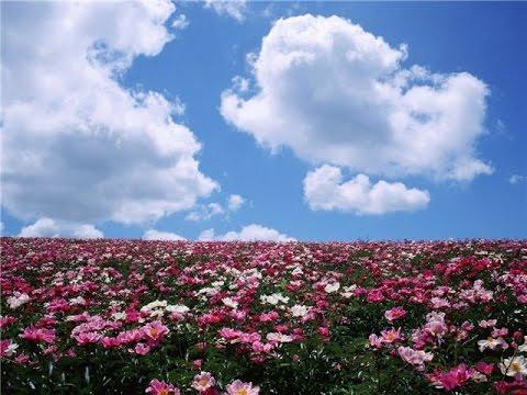 💮🌻Загадки для детей. Загадки про весенние цветы - загадки для детей
