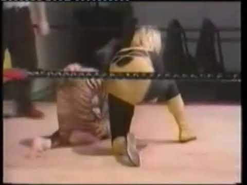 goldie vs tiger..... the decider
